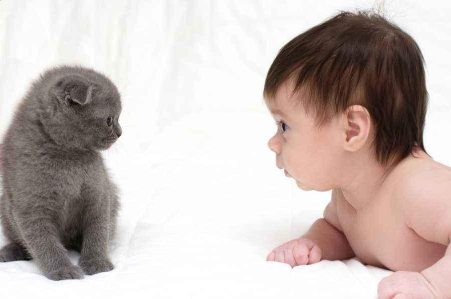Tips Memilih Hewan Peliharaan untuk si Kecil